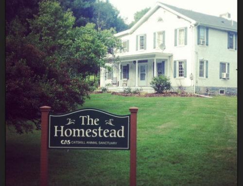 The Homestead at Catskill Animal Sanctuary